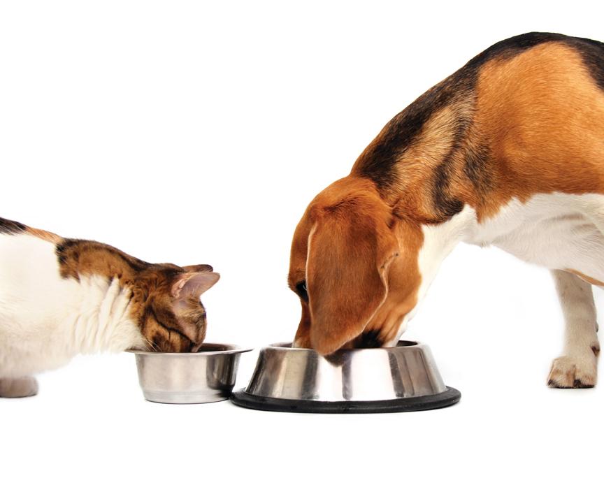 cani-gatti-alimentazione-oncologia-cancro-tumore