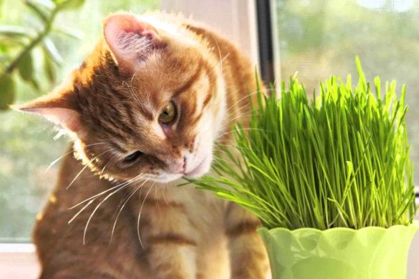 fitoterapia-gatto-veterinaria-modena