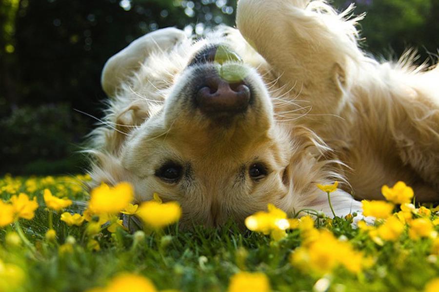 floriterapia-fiori-di-bach-gatto-cane-veterinaria-sassuolo-baggiovara