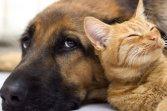 Greenvet casi clinici veterinario casi risolti