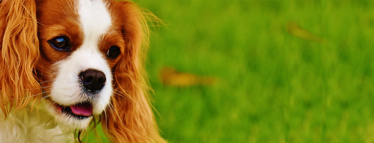 l'ambulatorio Greenvet propone cure omeopatiche veterinarie per il tuo cucciolo