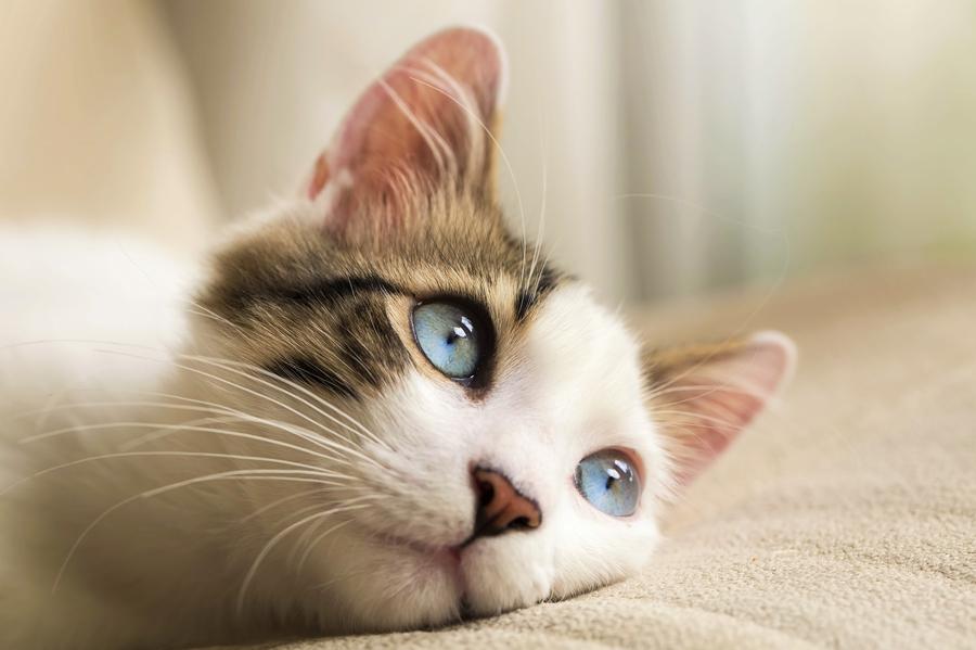 trattamenti-omeopatici-chemioterapia-cane-gatto